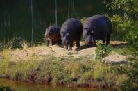 Während Familie Hippo im Mlilwane-Nationalpark skeptisch dreinschaut...