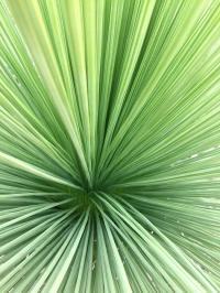 tiefer Blick in einen Grasbaum