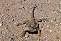 Begeistert war das Tier nicht von seiner Versetzung an den Straßenrand.