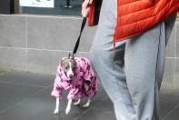 Das Wetter in Melbourne schüttelte Hund samt Hütte, aber wir kommen wieder.