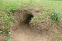 ... bevor die Wombats wieder in ihre geräumigen Höhlen zurückkehren.