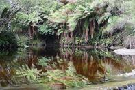 Malerisch schlängelt sich der Halls Bach durch den Urwald.