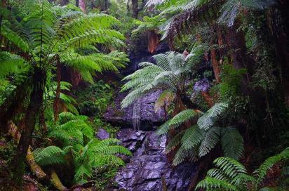Bei unserer Wanderung durch den Regenwald kam vom Himmel kam mehr Wasser als die Cyathea-Falls hinabgeflossen ist.