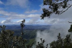 Tiefgrüne Wälder soweit das Auge reicht im New England Nationalpark. Der Gondwana Forest gehört zum Weltnaturerbe.