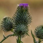 %name Fotoschooting mit Distel