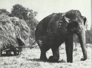 statt einer Zugmaschine ein Zirkuselefant.