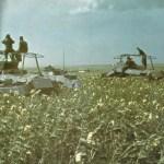 Wehrmacht Kriegsgliederung Fall Blau