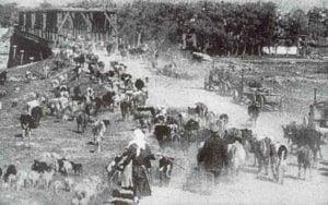 Russische Evakuierung von Vieh