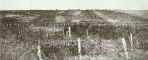 Hindenburg-Linie