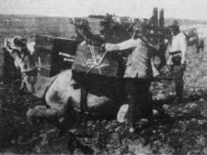 Kameltransport der türkischen Armee