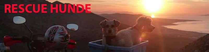Rescue-Hunde