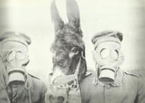 Gasmaske für Mensch und Muli.