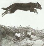 Botenhund