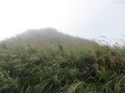 So viel Bambus!