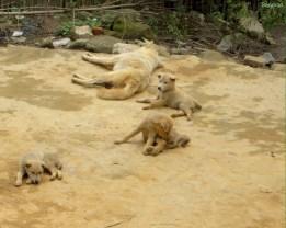 Tierbabys überall
