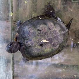 Schildkröten und...