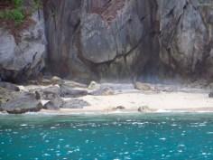 Das Islandhopping in El Nido beginnt direkt mit Strandaffen