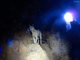 Die Hunde kommen sogar mit in die Höhle