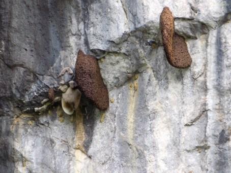 Bienenwaben am steilen Berghang