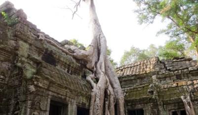 Tempelbaum