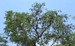 Der ganze Baum hängt voll!