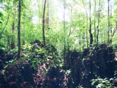 Die Bäume wachsen aus den Steinen