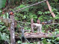 Dschungelhörnchen