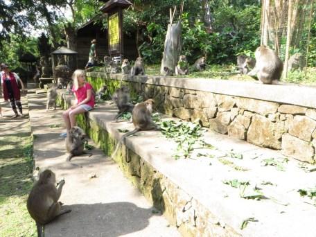 Clara sind die Affen etwas unheimlich.
