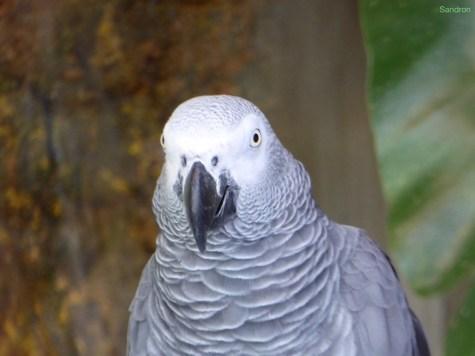 cooler Vogel