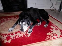 alte Hunde brauchen viel Schlaf