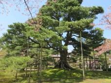 In einem der schönsten Gärten Japans