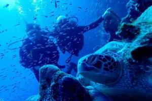 Die Gewässer um Bunaken sind ein Paradies für Schildkröten (Foto: Jobel).
