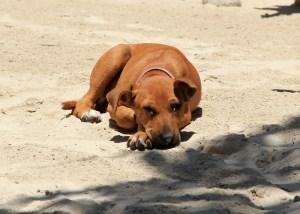 weltreize-hundewelpe-sansibar
