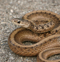 Identification and Conservation of Wisconsin's Reptiles (Prairie Lecture #2) @ Welty Environmental Center