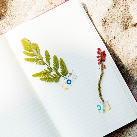 Make A Pressed Plant Journal: A Make And Take Program With Welty Environmental Center @ Nature At The Confluence Campus