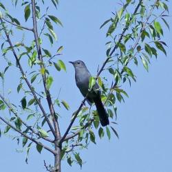No School Friday: Birds of Big Hill Park @ Welty Environmental Center