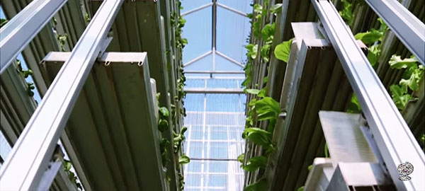 Singapore-vertical-farm