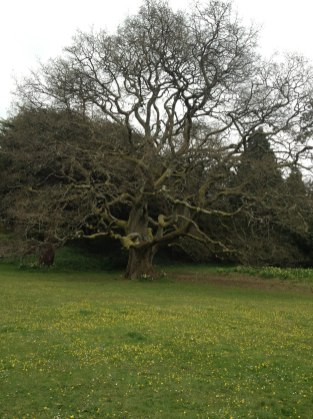 Look at this huge old tree!
