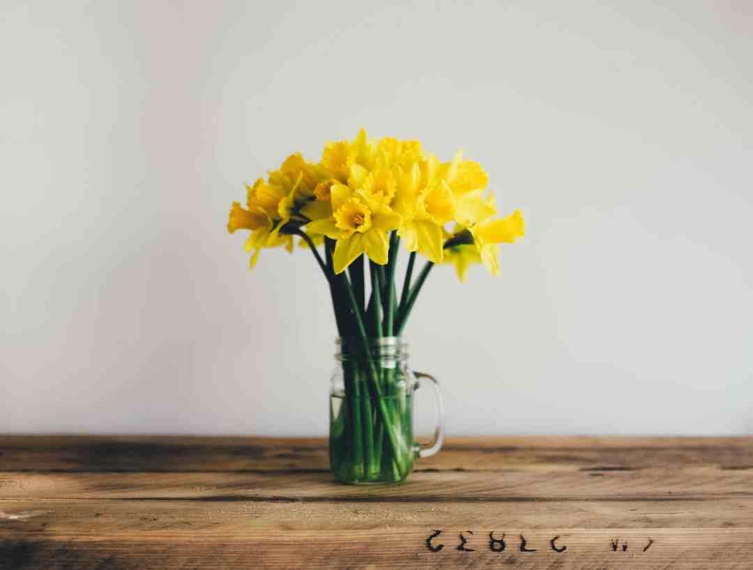 daffodils vase