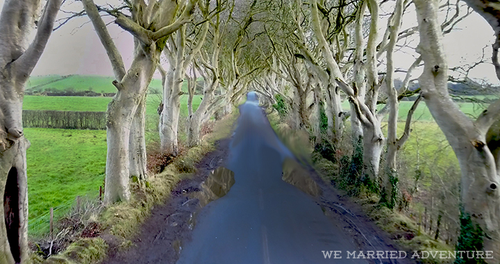 mike_dark_hedges_wm