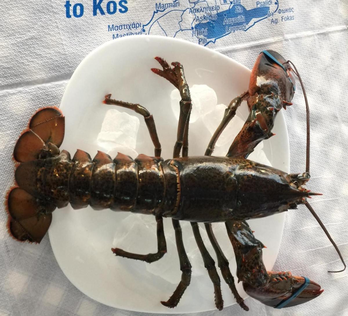 Fresh Lobster at Sifis Restaurant Taverna