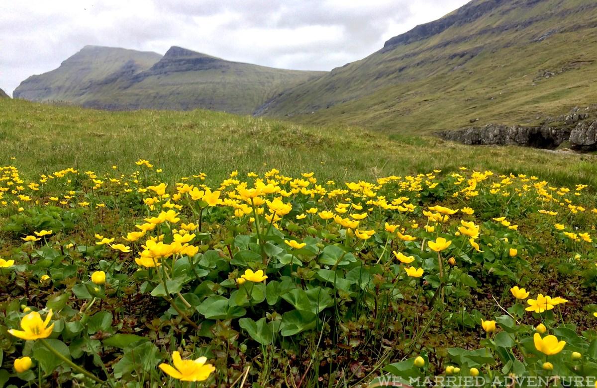 daffodils01_wm