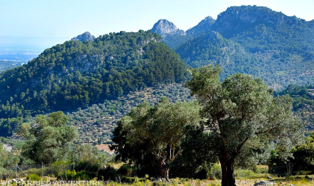 olive_trees01_wm