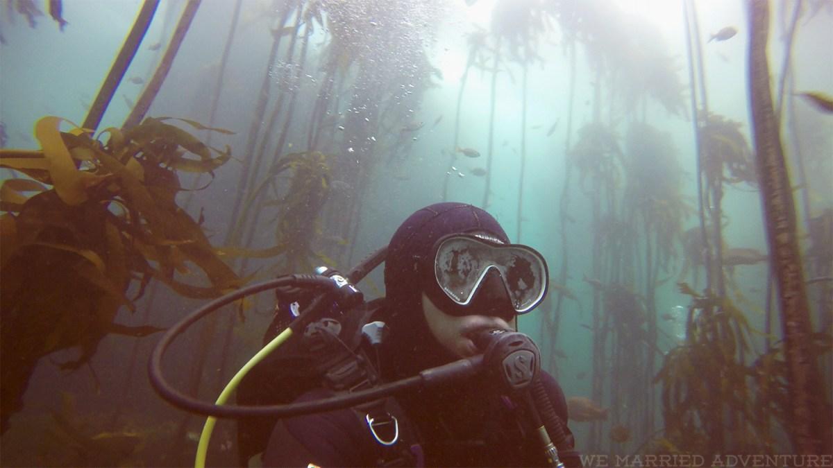 kelp_dive04_wm