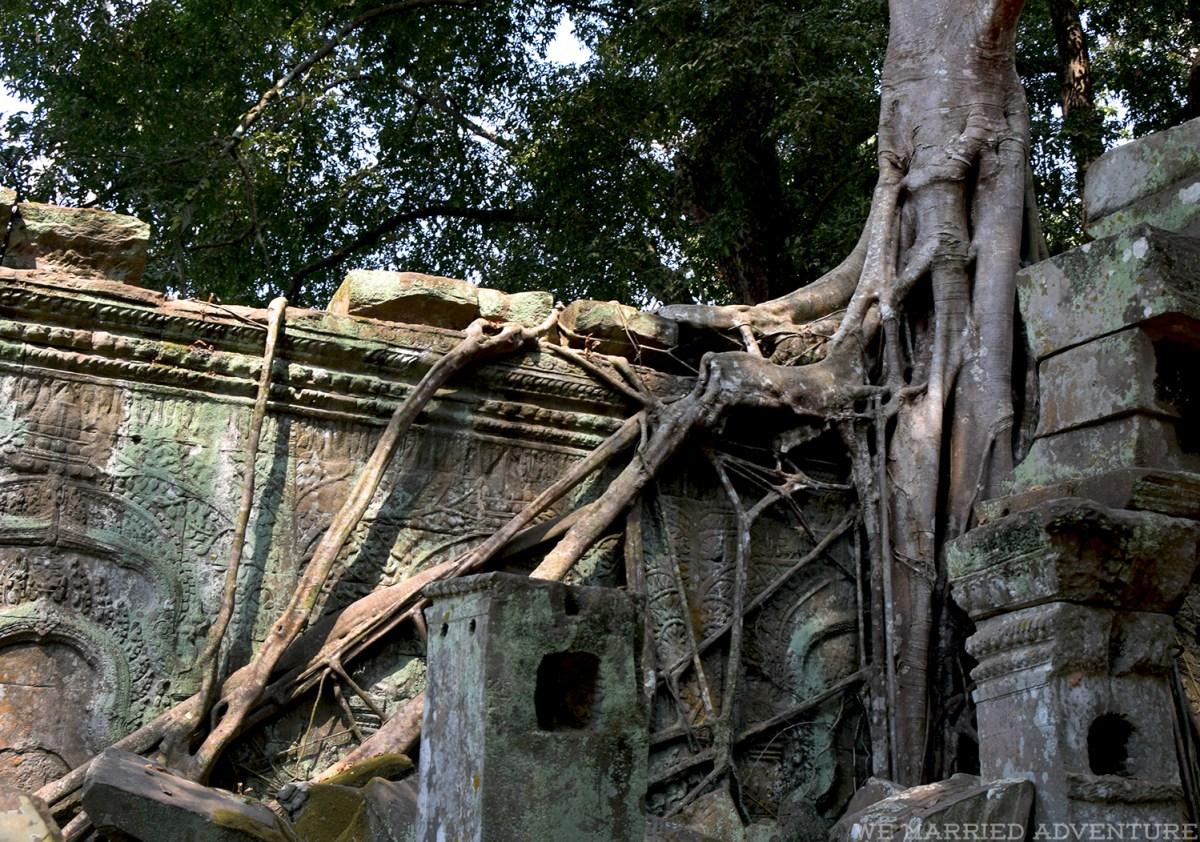 tree_roots01_wm