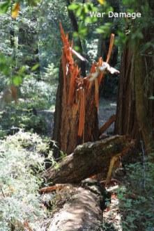 sm-giant-felled-tree-IMG_0026