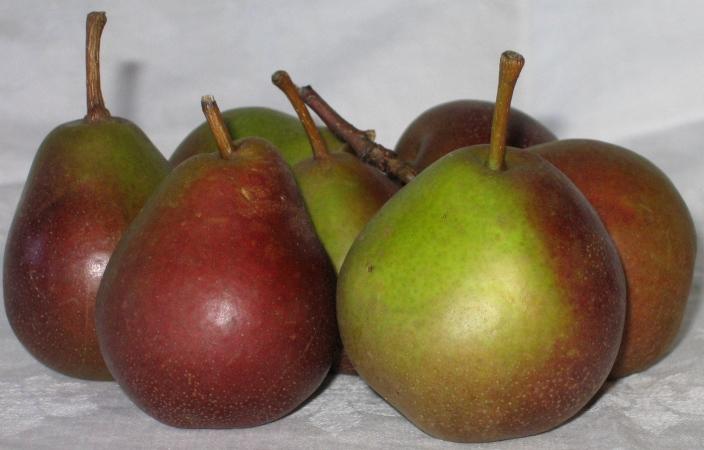 Seckel (sugar) Pears