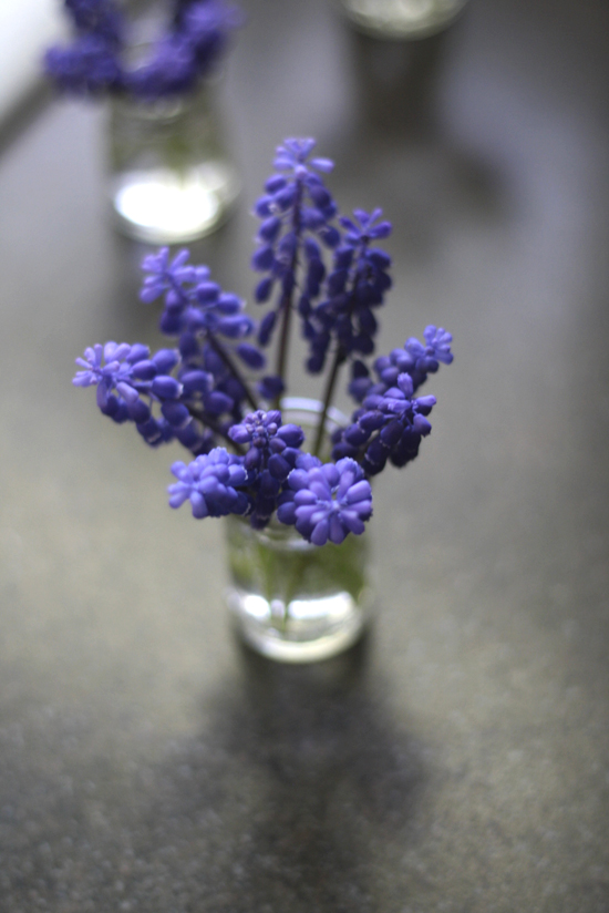 1-jar-grape-hyacinth-overhead