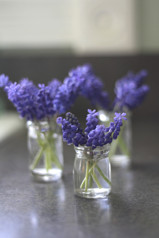 3-creamer-jar-grape-hyacinth-vertical-kitchen