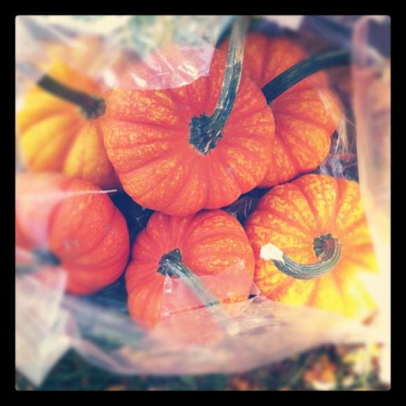 Small-orange-pumpkins-in-bag